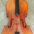 6 year old Strad model